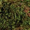 TrixieTerrarium Moss –мох для террариума