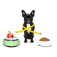 Ветеринарное диетическое питание для собак