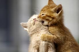Advance (Эдванс) Cat Kitten корм для котят с курицей