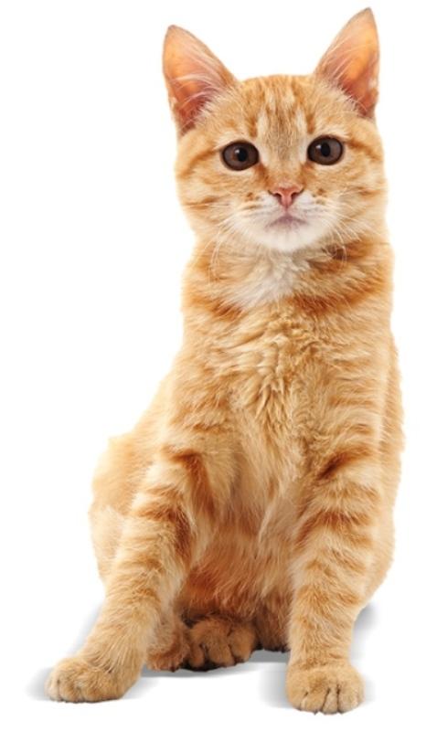 Игрушка для кошек Georplast Tricky с отверстиями для лап и мячиками внутри