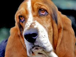 Специальные средства для собак - MENFORSAN - (Испания)