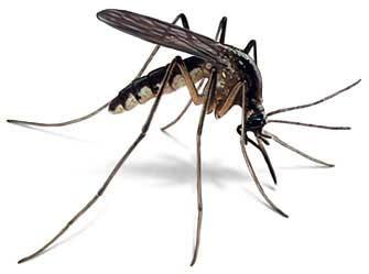Средство защиты от комаров