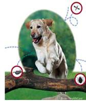 Средства защиты Bayer Advantix (Адвантикс) для собак более 25 кг